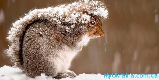 когда будет зима в 2019 году в Украине
