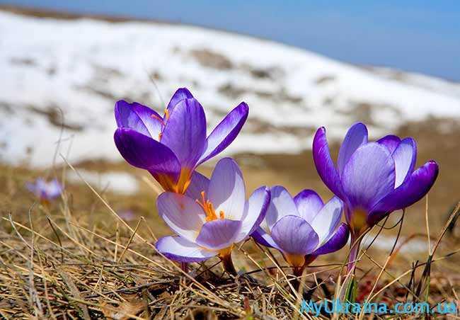 какая будет весна 2017 в Украине