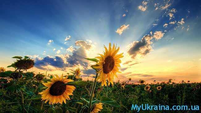 когда придет лето в Украину в 2017 году