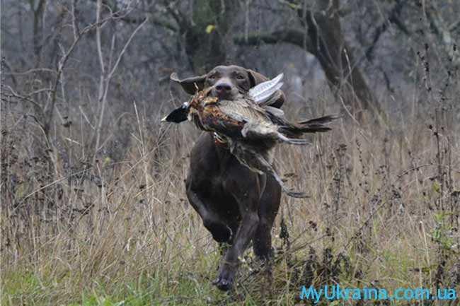 срок проведения весенней охоты в 2019 году