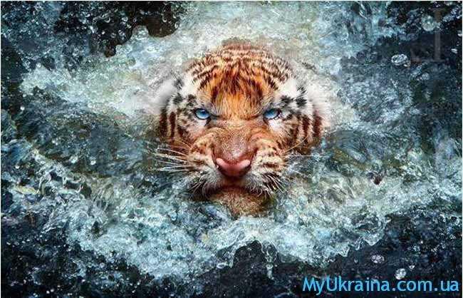 Тигр. Восточный гороскоп на 2019 год