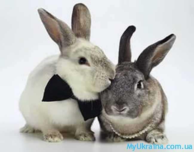 что ждет Кролика в 2017 году по восточному гороскопу