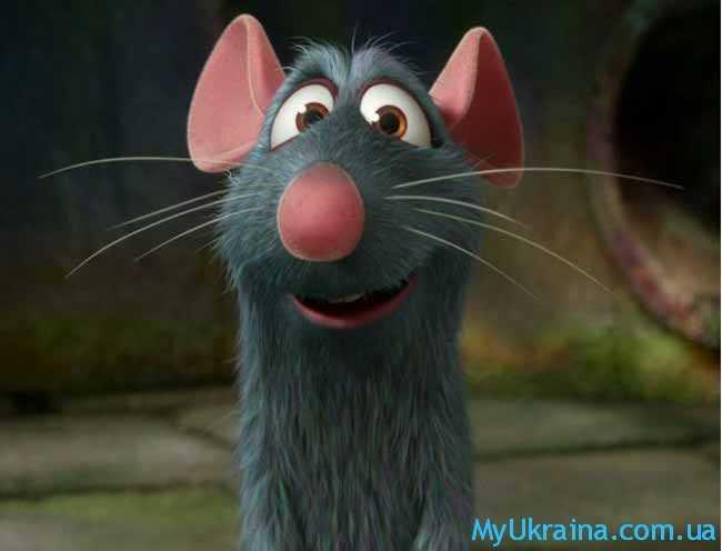 Крыса. Восточный гороскоп на 2017 год