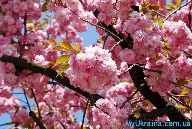 Карпаты в цветении