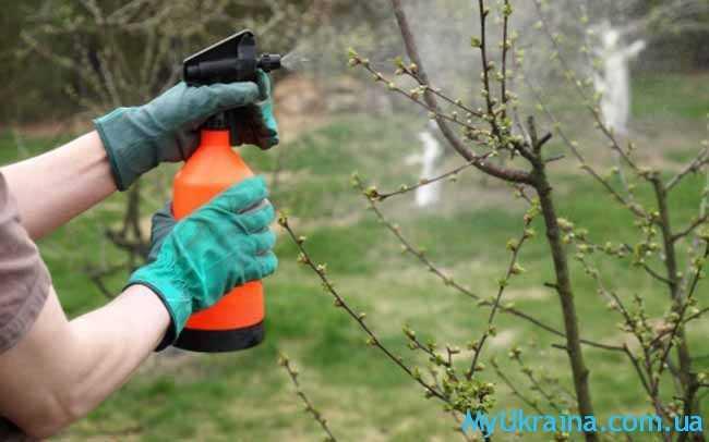 обрызгивание деревьев