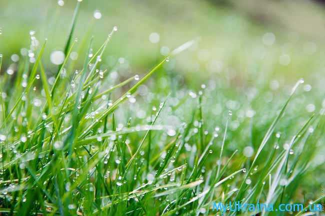 апрельская зеленая травка