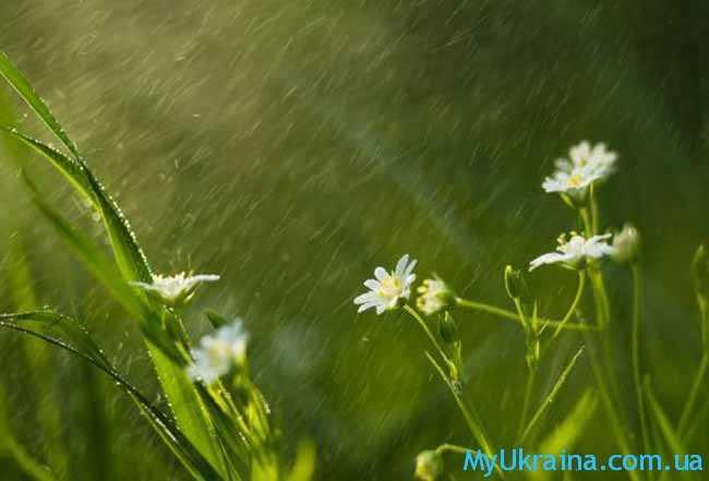 дождик льется