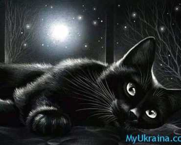черная кошка и луна