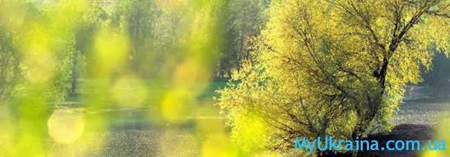 майская зелень