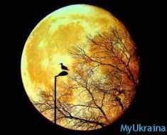 луна и птичка