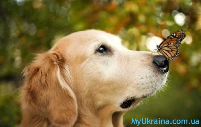 Семья и брак в год Собаки