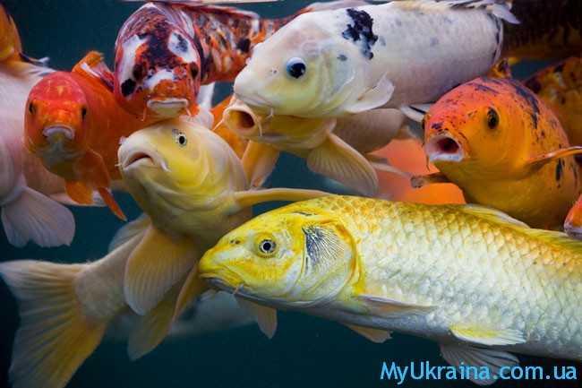 Знак-Рыбы