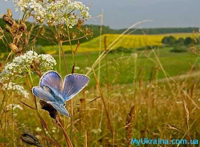Август - это завершение прекрасного и уютного летнего сезона