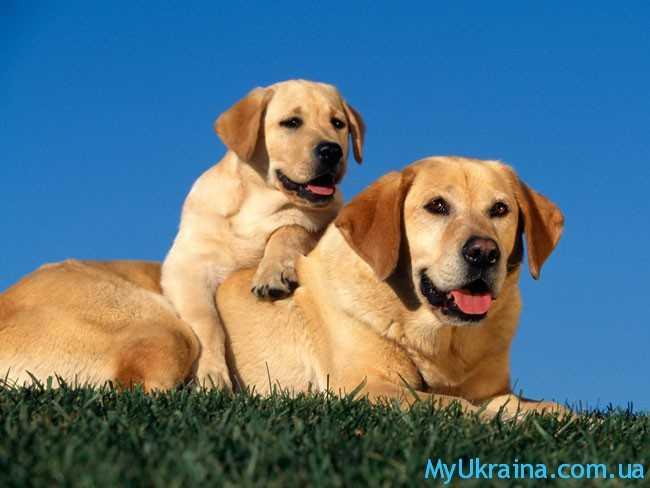 симпатичные собачки
