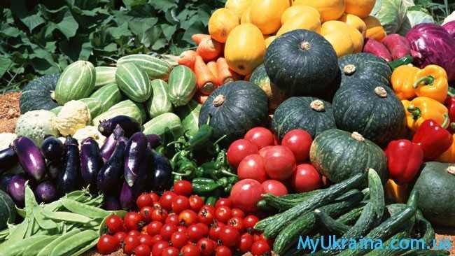 хороший урожай овощеводов