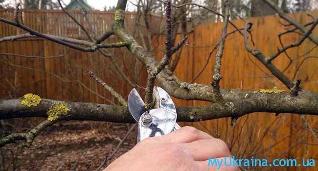обрезаем сухие и сломанные ветви у кустарников
