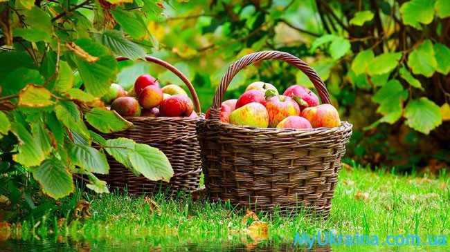 Август - это завершение знойного и прекрасного лета