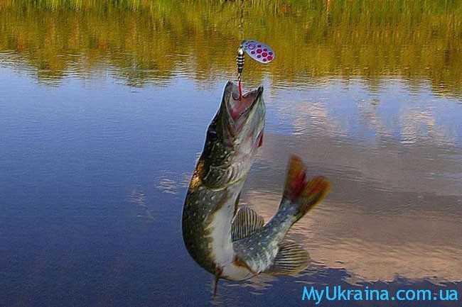 отличная пора для любителей рыбной ловли
