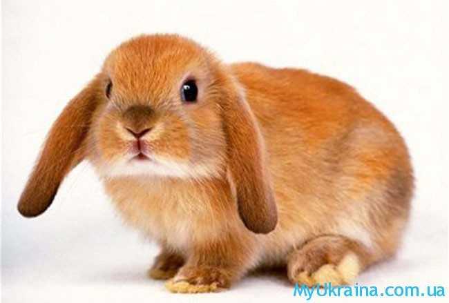 Представители года Кролика