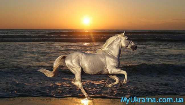 Президент на Белом коне