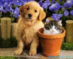 земляная собака и котик