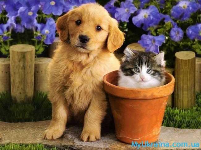 желтая земляная собака и котик