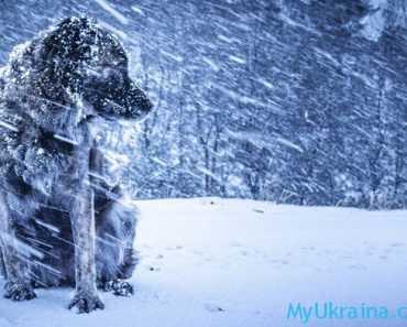С какой погоды начнется новый год?