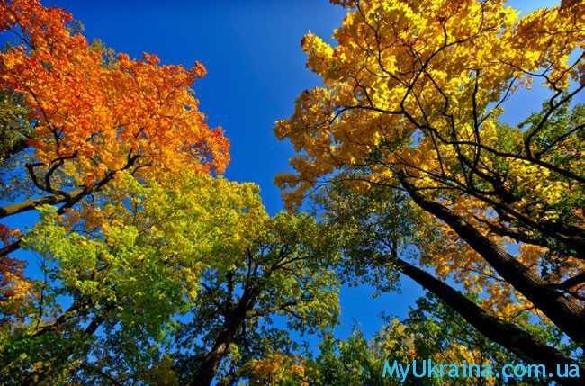 Сентябрь - это самое прекрасное время осеннего периода