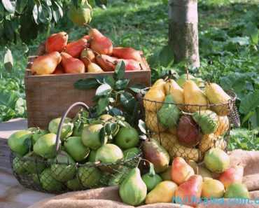 в августе производится сбор большей части урожая