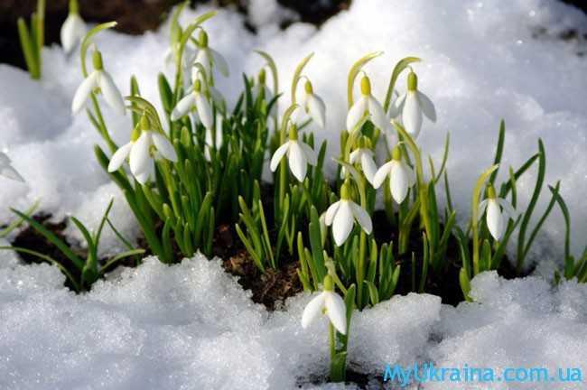 Весной всё оживает после зимних холодов