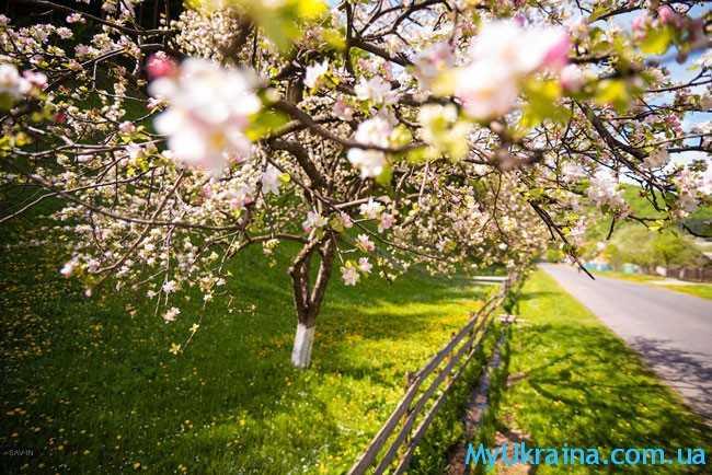 в апреле жители Украины почувствуют на себе настоящую весну