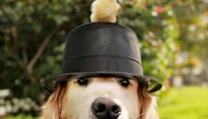 собака и цыпленок