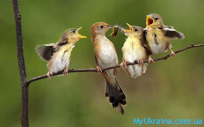 Что подскажут птицы