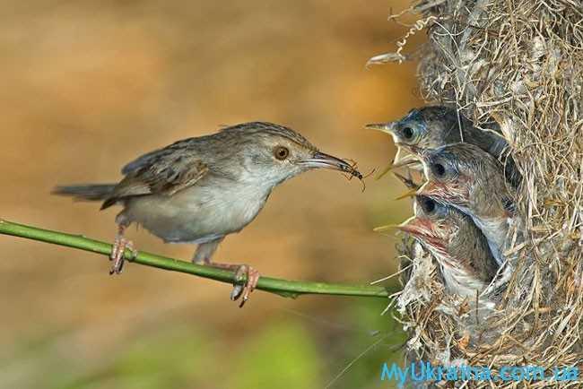 птички летом