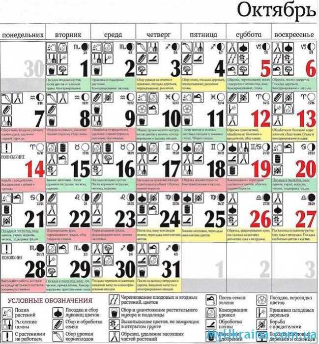 посевной календарь на октябрь 2019