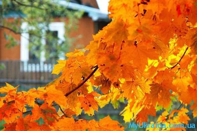 октябрь связан с завершением огородного сезона