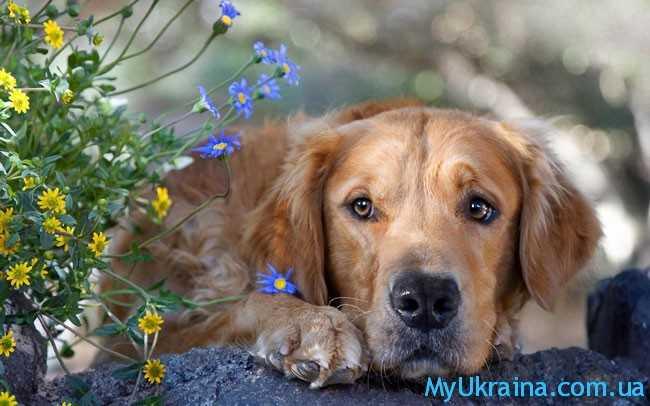 Чем порадует год Желтой собаки представителей Рыб?