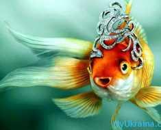 Общий Гороскоп на 2018 год для Рыб