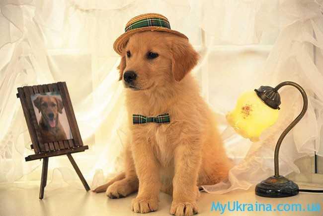 В наступающем году руководить будет Собака