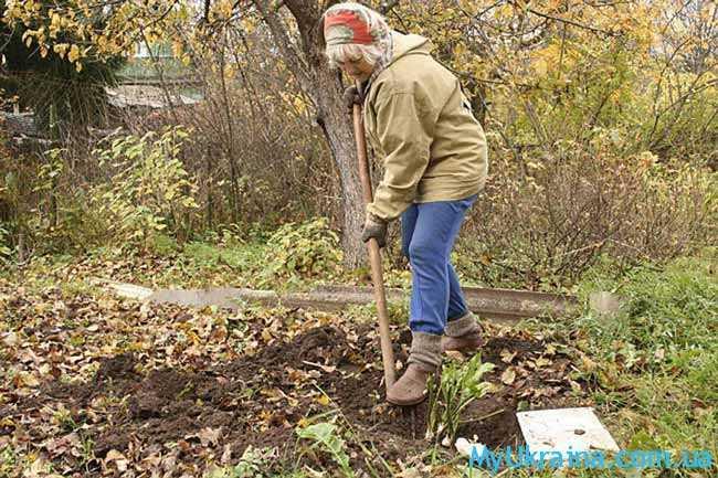 Важные заботы огородников для ноября