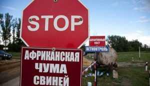 африканская чума свиней в Украине