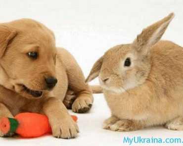 Общий прогноз для Кролика