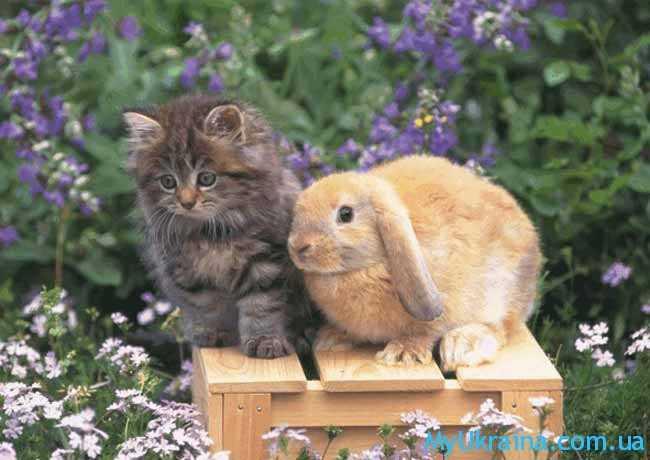 Кот (Кролик) вправе надеяться на удачу в 2018 году
