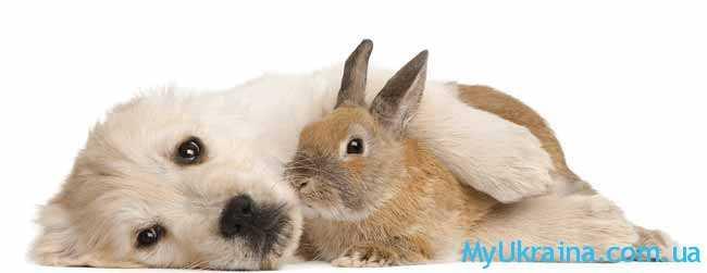 Кролики будут часто знакомиться