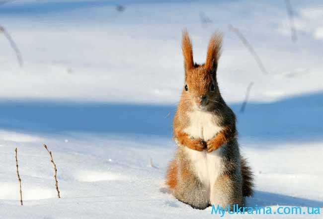 Февраль - это завершающий зимний сезон месяц