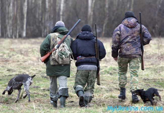 Сроки сезоны охоты