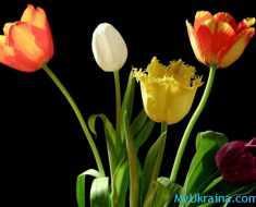 Праздник 8-го марта