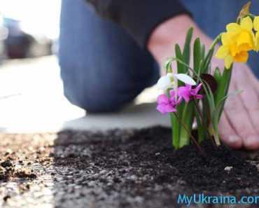 Весна – лучшее время для посадки цветов