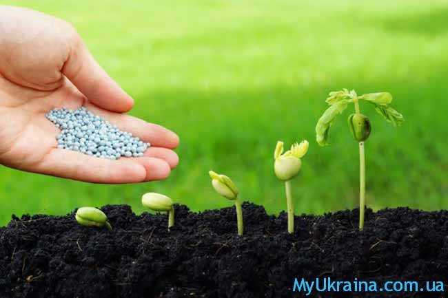 Органические семена и удобрения