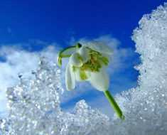 начинается звонкая и веселая весна
